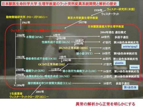 日本獣医生命科学大学 生理学教室のラット突然変異系統開発と解析の歴史